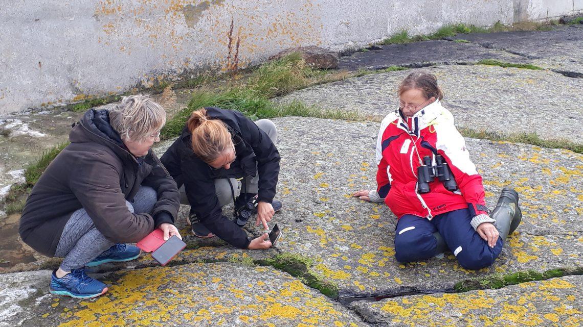 Kolme naista tutkivat kasveja kalliolla