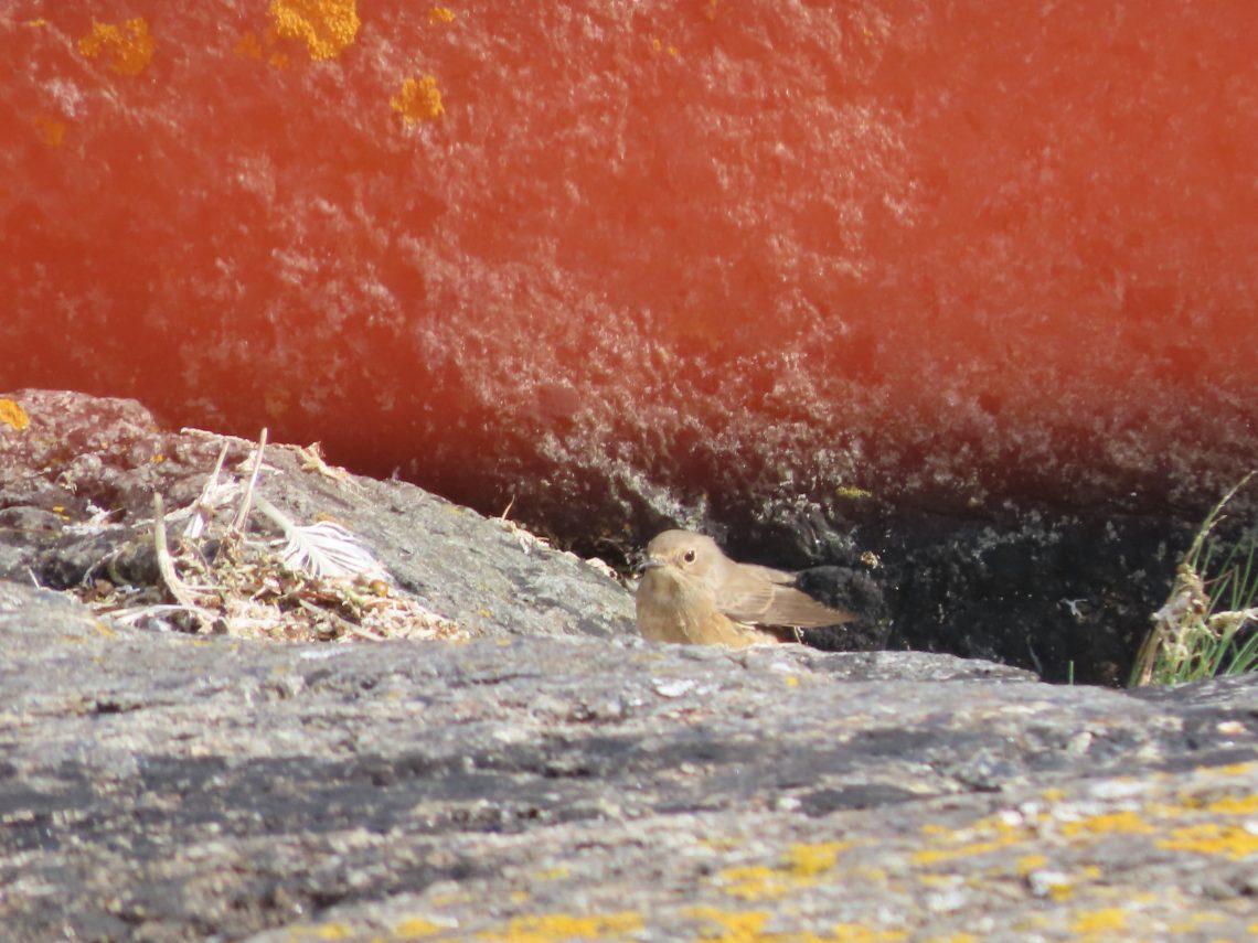 Pieni lintu nimeltään leppälintu